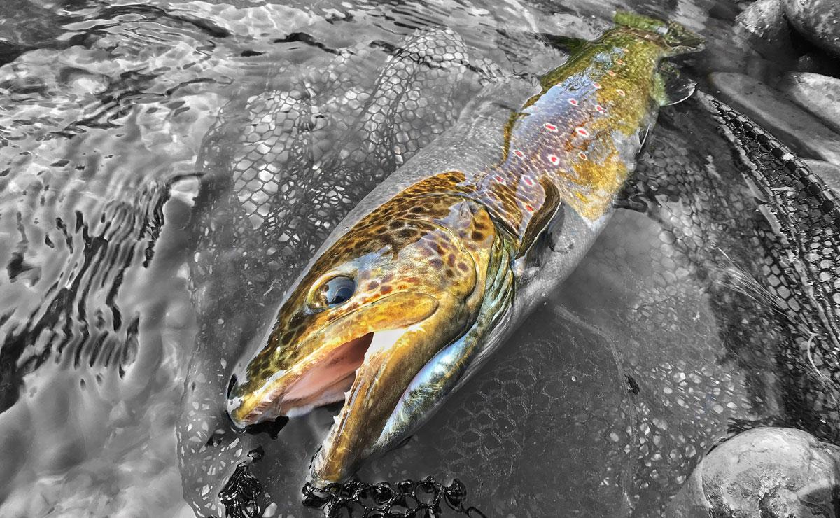 Pesca sin muerte