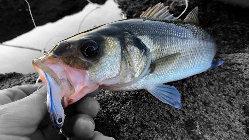 Galerías KRID LifetimeFishing Saltwater Flyfishing